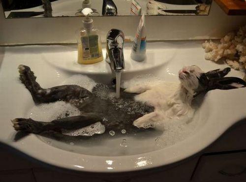 うさぎ風呂.jpg