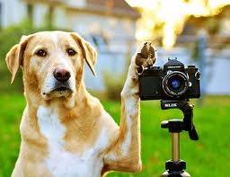 カメラ犬.jpg