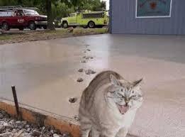 コンクリ猫.jpg