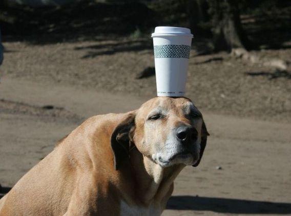スタバ犬.jpg