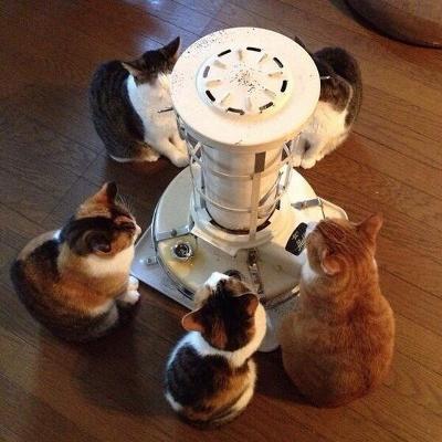 ストーブ猫.jpg