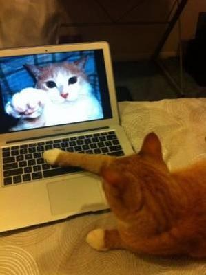 チャット猫.jpg