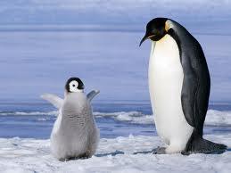 ペンギン親子.jpg