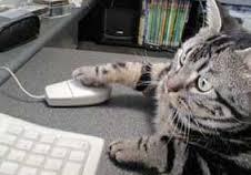 マウスねこ.jpg