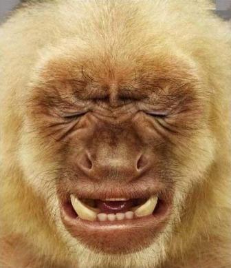 悔しい猿.png