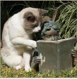 猫と本.jpg