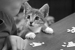 猫デスク.jpg
