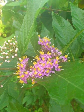 白浜の花.JPG
