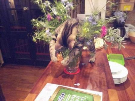 花瓶猫.jpg