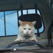 運転ねこ.jpg